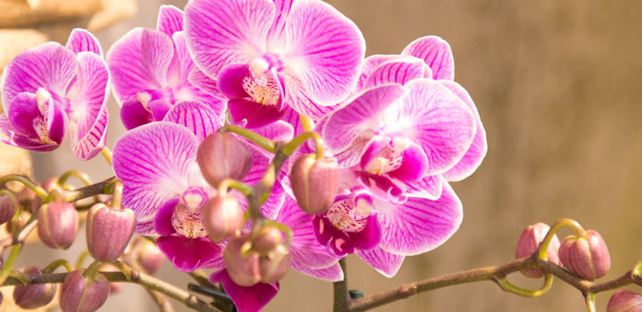 Orchideenausstellung ab dem 18.02.2017