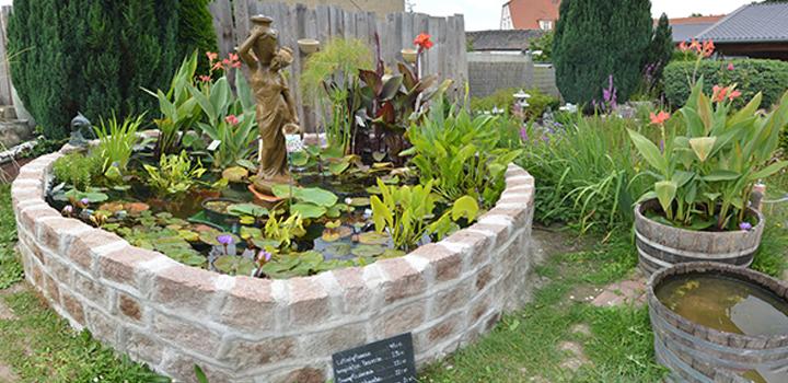 01 Aussengelände Lotuspflanzen tropische Seerosen