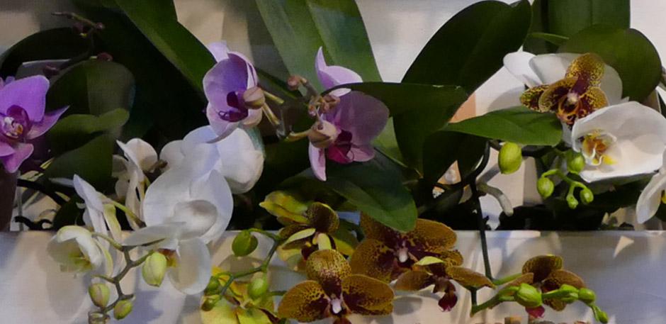 """Orchideenschau - Willkommen im """"Indian Spa"""""""