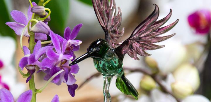 Orchideenausstellung seit dem 26. September eröffnet
